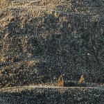 Surface habitable (basse), Bass Rock, East Lothian, Ecosse par Charles Everitt
