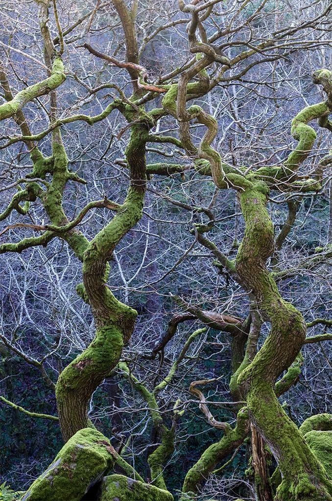 Torsades vertes, Derbyshire, en Angleterre par Steve Palmer