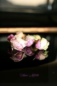 Choix de la rose de Damas, soin visage, antioxydant, anti-âge, anti-rides, cicatrisant