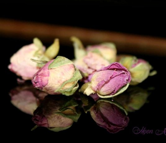 Eau de rose de Damas, soin visage, antioxydant, anti-âge, anti-rides, cicatrisant