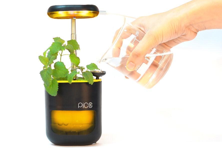 une cosse PICO noire et jaune avec de l'eau ajoutée. une plante verte pousse dans la gousse