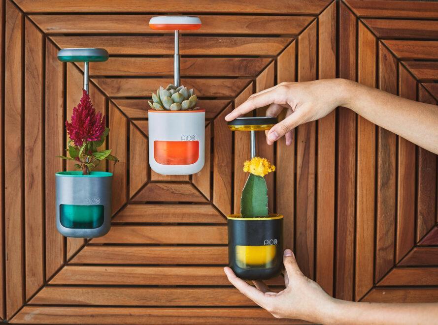 trois pods PICO montés sur un mur marron. chacun détient une plante différente