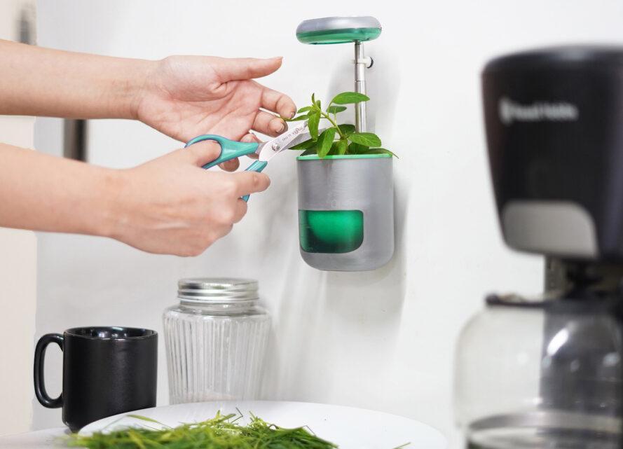 un PICO bleu et argent mural avec une plante verte qui y pousse. une main avec des ciseaux coupe une partie de la plante