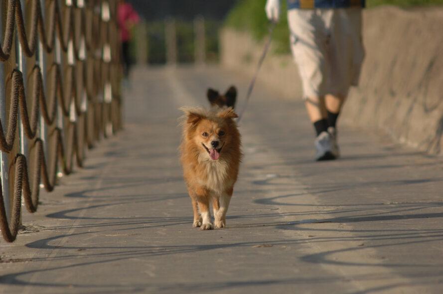 personne, marche, deux, chiens, pont