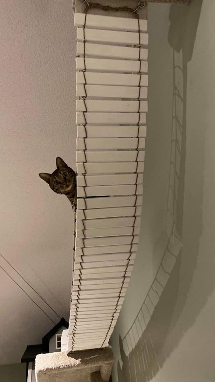 Tour de chat extra haute