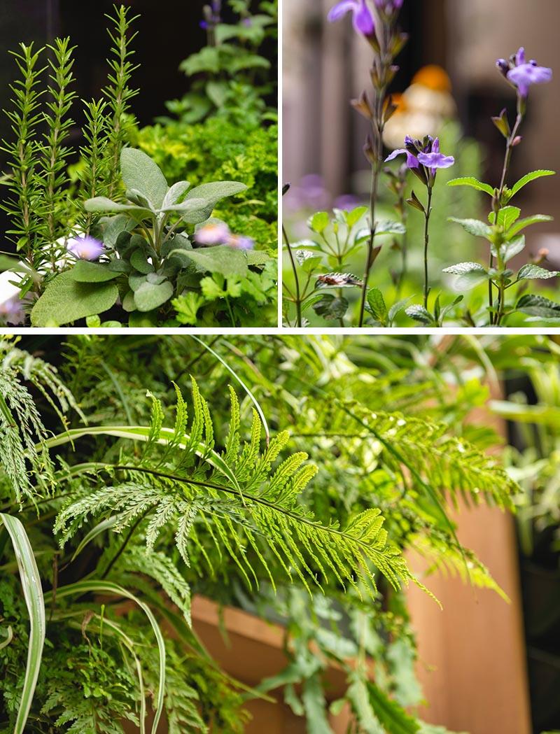 Les herbes comestibles et les vivaces à fleurs fournissent une touche de couleur et un élément de changement saisonnier. #Plantes #Jardinage #Jardin