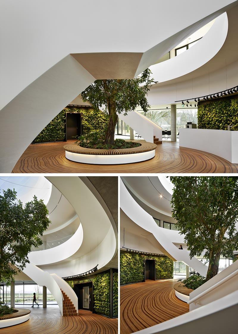 Le plancher en bois de cet atrium de bureau a été conçu pour représenter les anneaux de croissance d'un arbre.  #WoodFloor #FlooringIdeas #ArtisticFlooring #SculpturalFlooring #GreenWalls