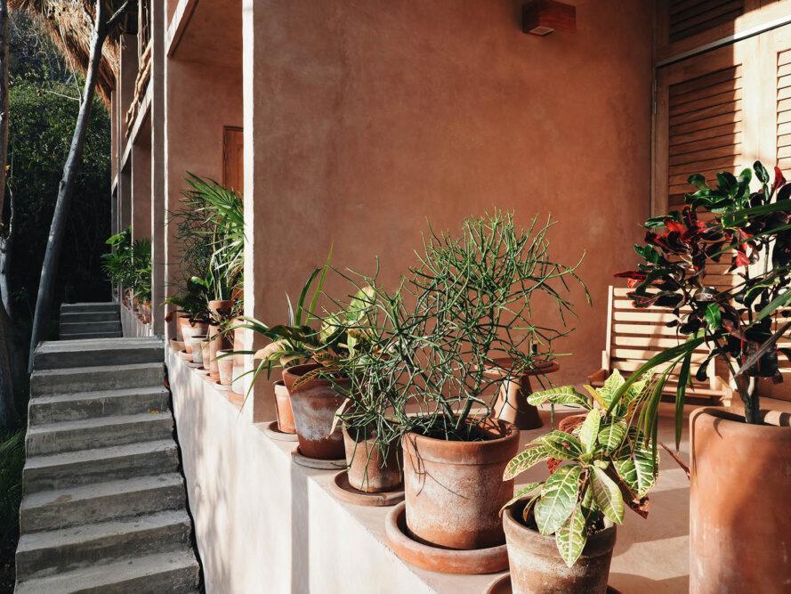 un bâtiment avec des murs rose poussiéreux à côté d'un escalier en béton.  des plantes en pot vertes sont installées sur le rebord entre le bâtiment et les escaliers.