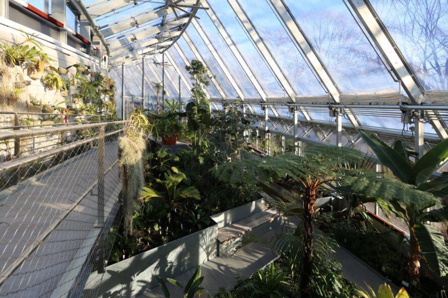 serre à plusieurs étages recouverte de plantes