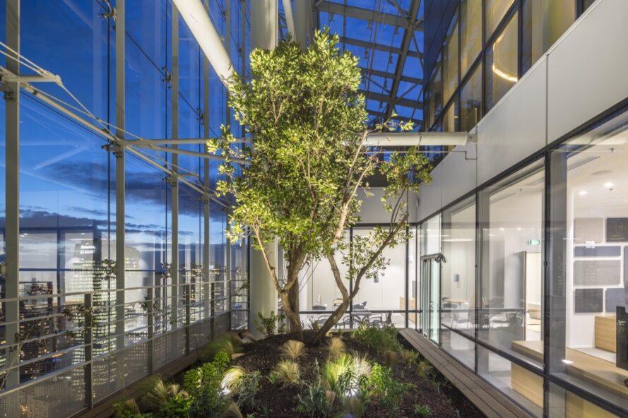 grand arbre poussant à l'intérieur d'une pièce vitrée