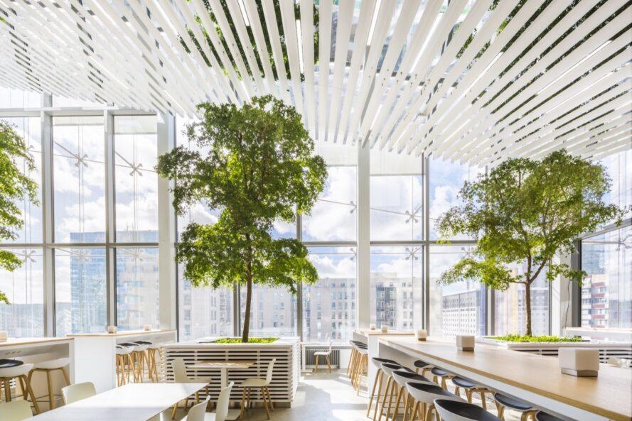 arbres poussant à côté de longues tables en bois