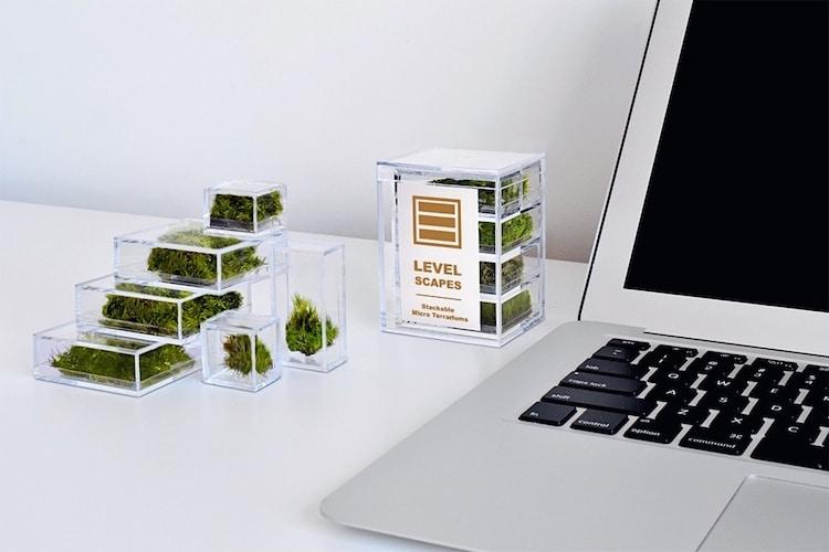 Petits terrariums de bureau pour la maison