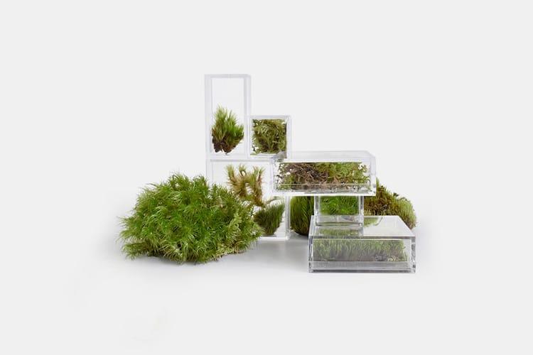Petits terrariums pour la maison et le bureau