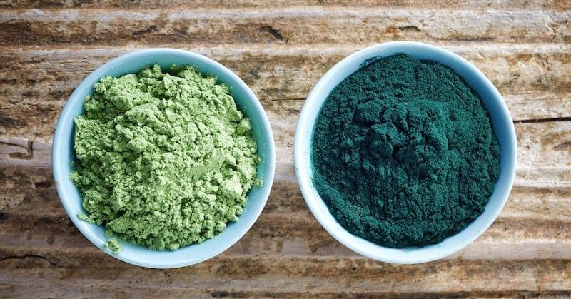 algue chlorella
