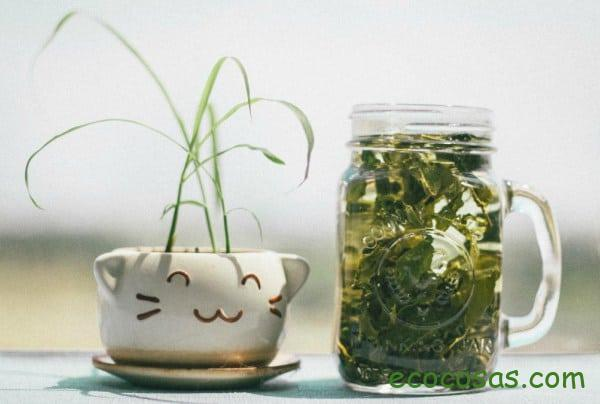 propriétés du thé vert