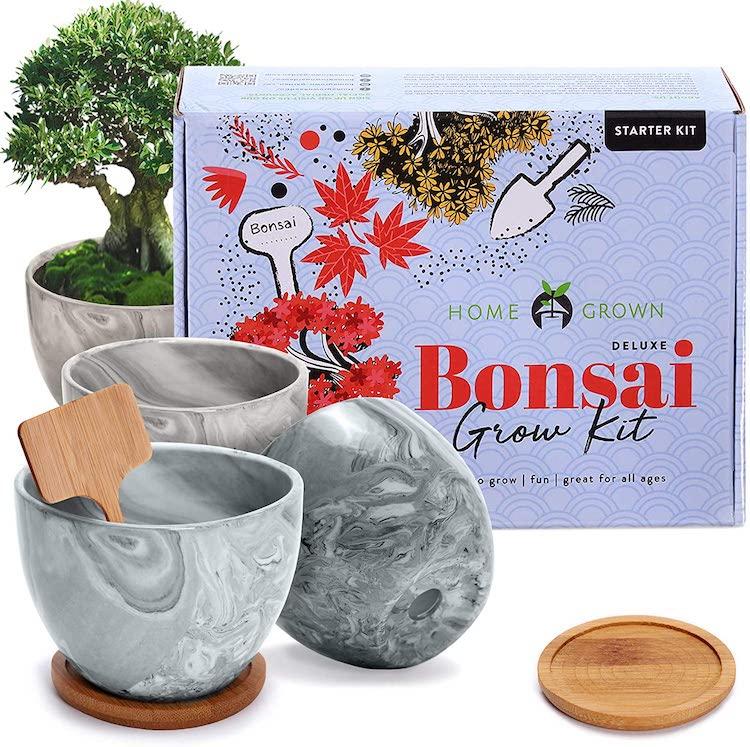 Kit d'arbre bonsaï cultivé à la maison