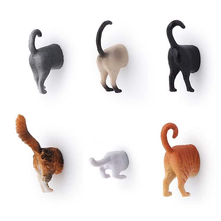 Aimants de chat