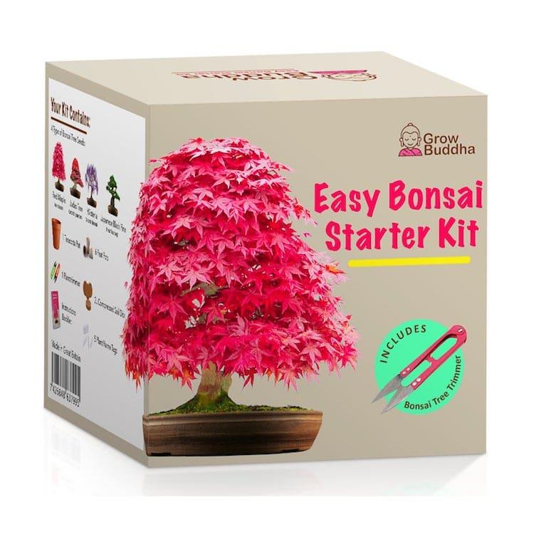 Cultivez votre propre kit de bonsaï