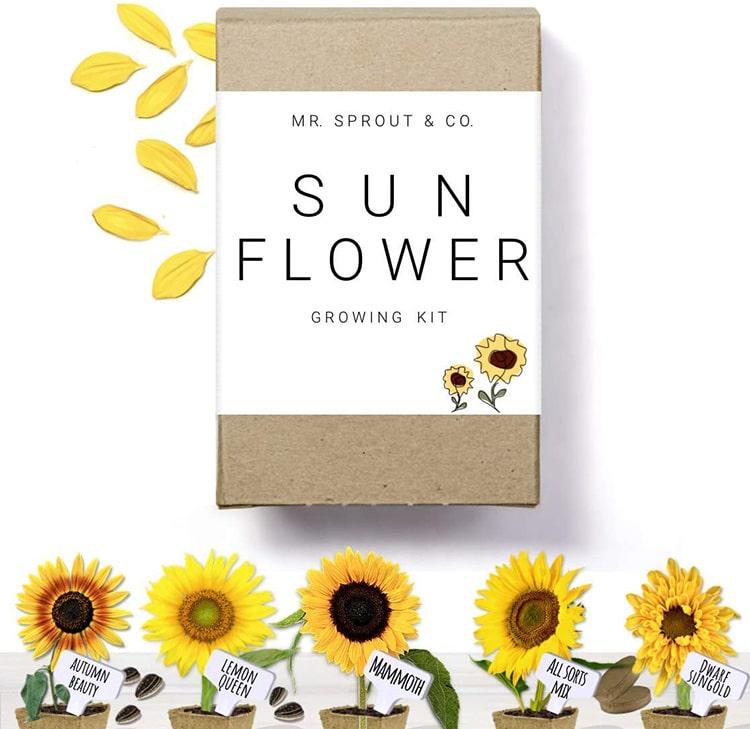 Kit de démarrage de semences de jardinage
