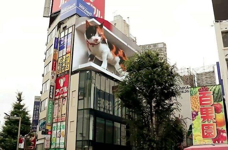 Panneau d'affichage chat 3D à Tokyo