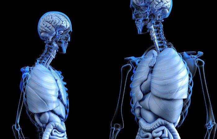 NVIDIA Deep Learning utilisé pour créer des images 3D à partir de données radiographiques