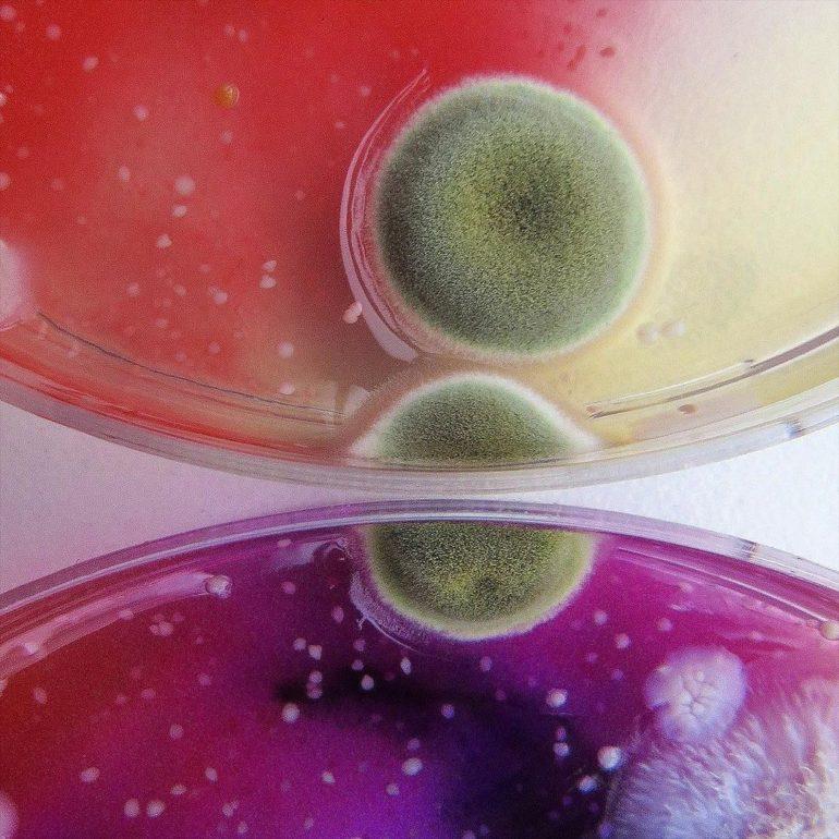 Quand la moisissure a l'air fabuleuse!  Les études sur les micro-organismes de Dasha Plesen