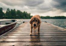Diarrhée chez le chien : remèdes maison pour la traiter