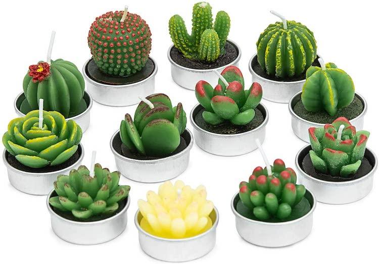 Bougies Succulentes
